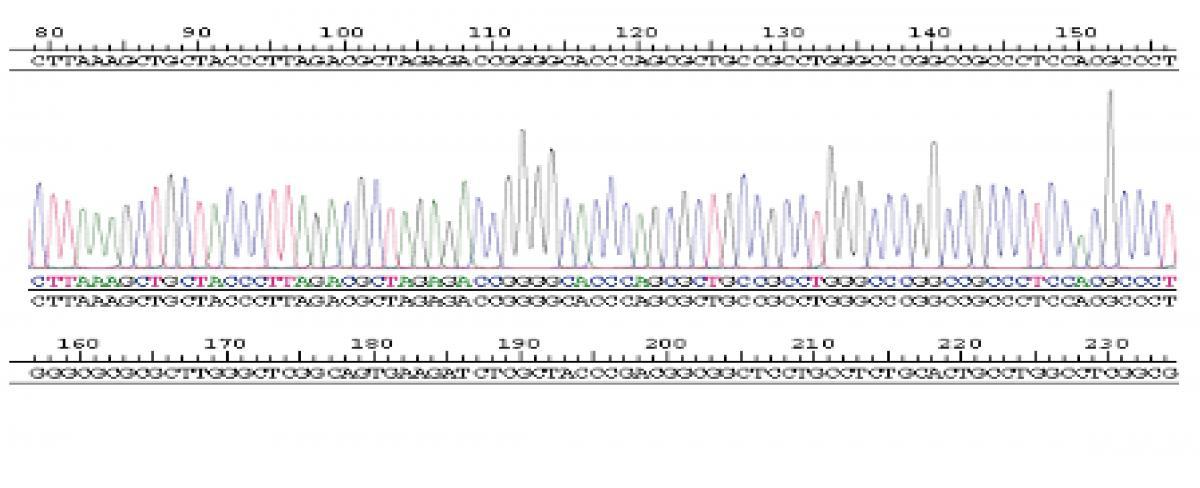 24 高通量测序新药靶点发现千赢官方下载.jpg